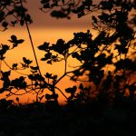 Sunset, peace, sky, plant, night, leaves, branches