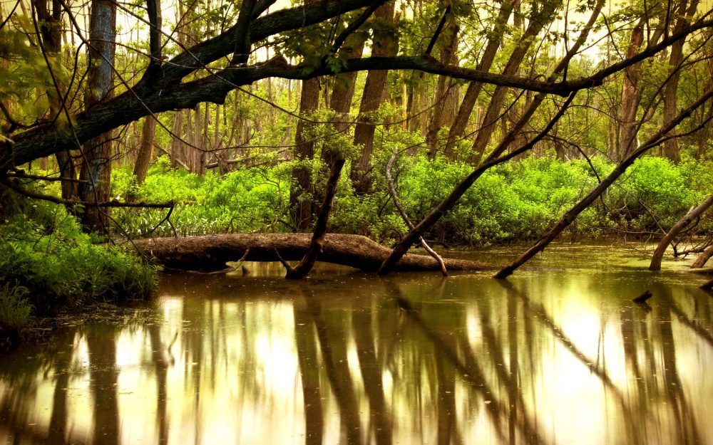 River, forest, river, trees, nature, water, beauty