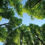 Leaves, photo, forests, trees, nature, sky