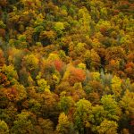 Leaves, forest, autumn, trees, nature, autumn wallpaper