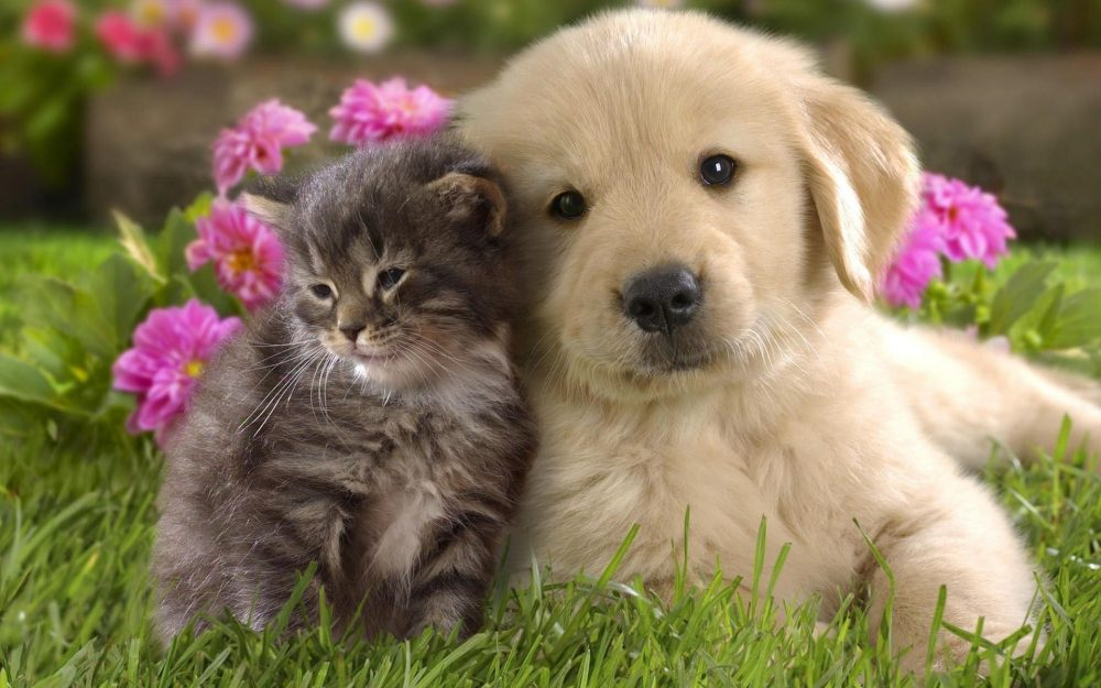 Desktop wallpaper high-resolution images of cats and dogs