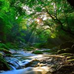 Forest stream beautiful scenery wallpaper big picture