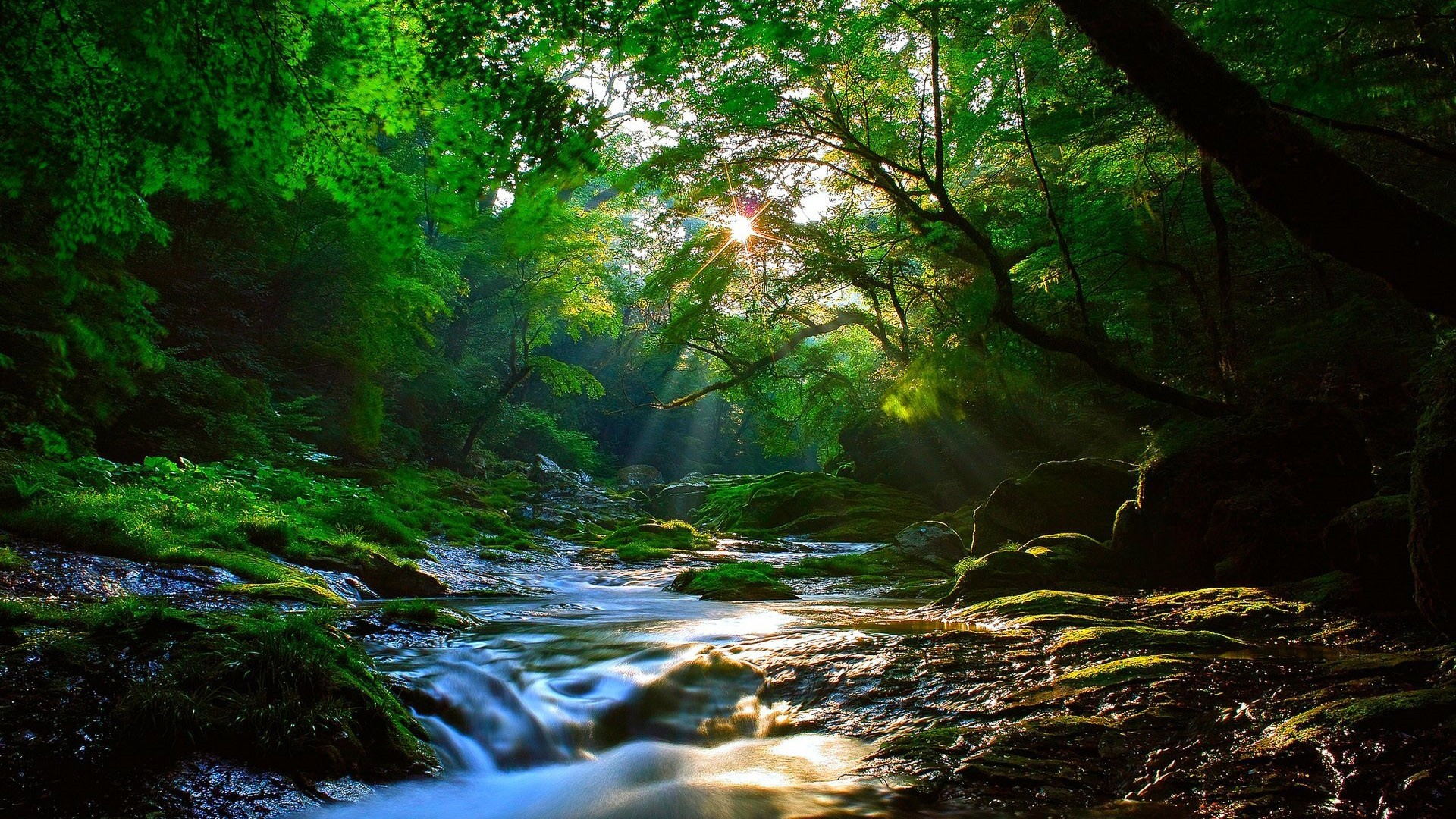 Forest Stream Beautiful Scenery Wallpaper Big Picture 8wallpapers