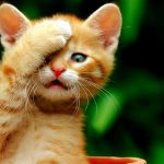Meow star who sell Meng funny desktop wallpaper pictures