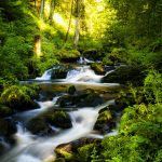 Forest, river, trees, rocks