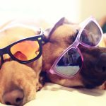 Meng cool dog wallpaper HD pictures