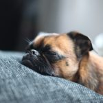 Sleeping in the dog wallpaper