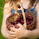 Cherries in a basket wallpaper