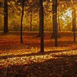 Forest, autumn, falling leaves, autumn wallpaper, foliage, leaf, leaves