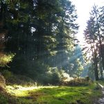 Forest, trees, road, sun, nature, light