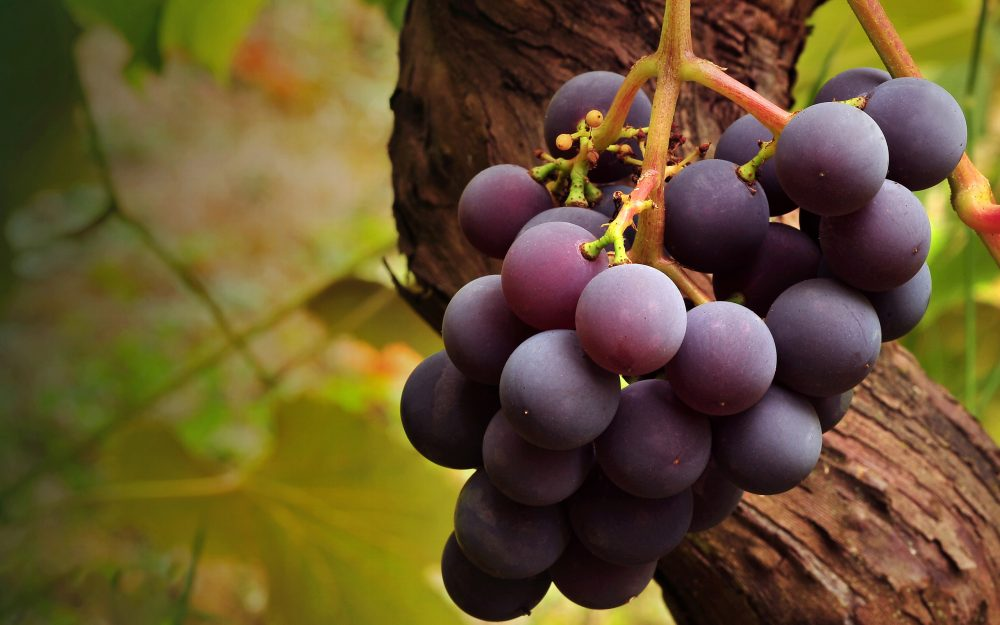 dark grapes wallpaper