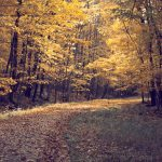 Leaves, forest, autumn, trees, road, nature, landscape