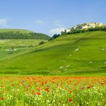 Green grass hills natural scenery wallpaper