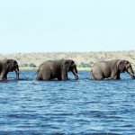 Elephants across the river