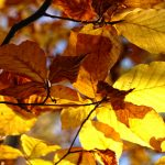 Leaves, autumn, trees, nature, autumn wallpaper, macro photography