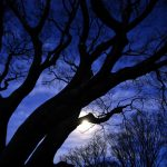 Moonlight trees Nature Landscape wallpaper