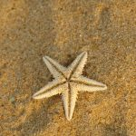 Sand, land, star, sea