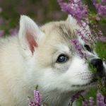 Liked adorable dog wallpaper download HD