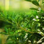 Nature, leaves, herbs