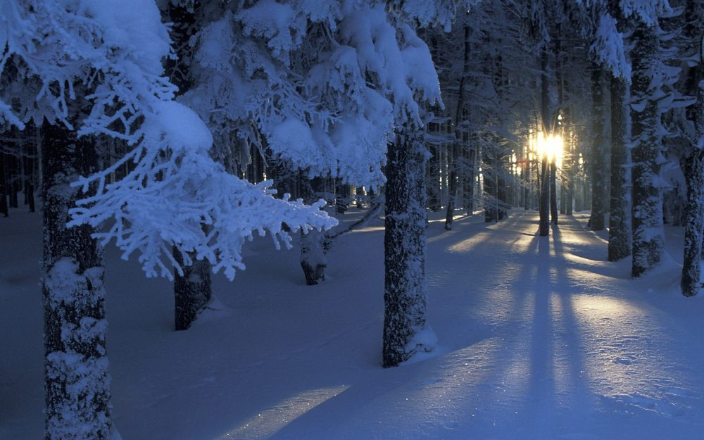Winter in the woods beautiful snow wallpaper