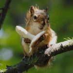 Squirrel foraging wallpaper