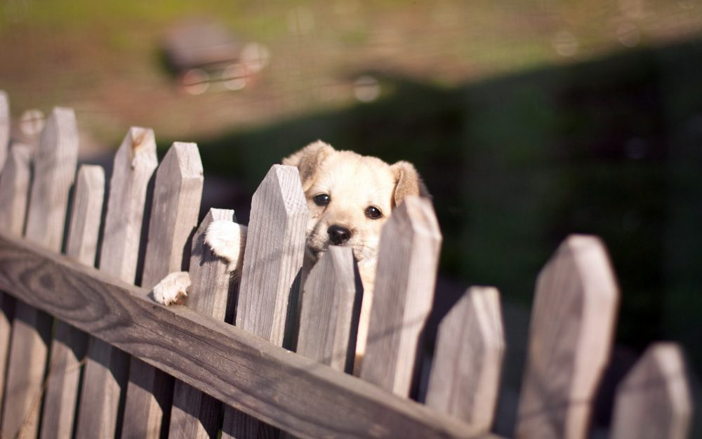 Fence, view, dog