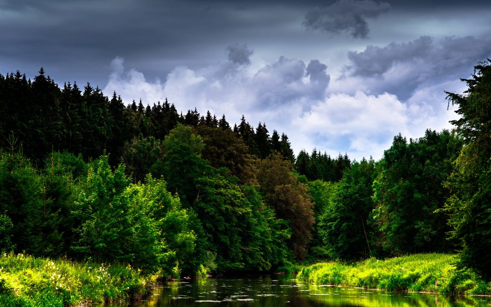overcast, beauty, forests