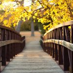 yellow, bridge, autumn