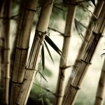 Mottled bamboo desktop background