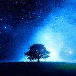 Star tree beautiful wallpaper