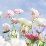 Flowers are blooming wallpaper
