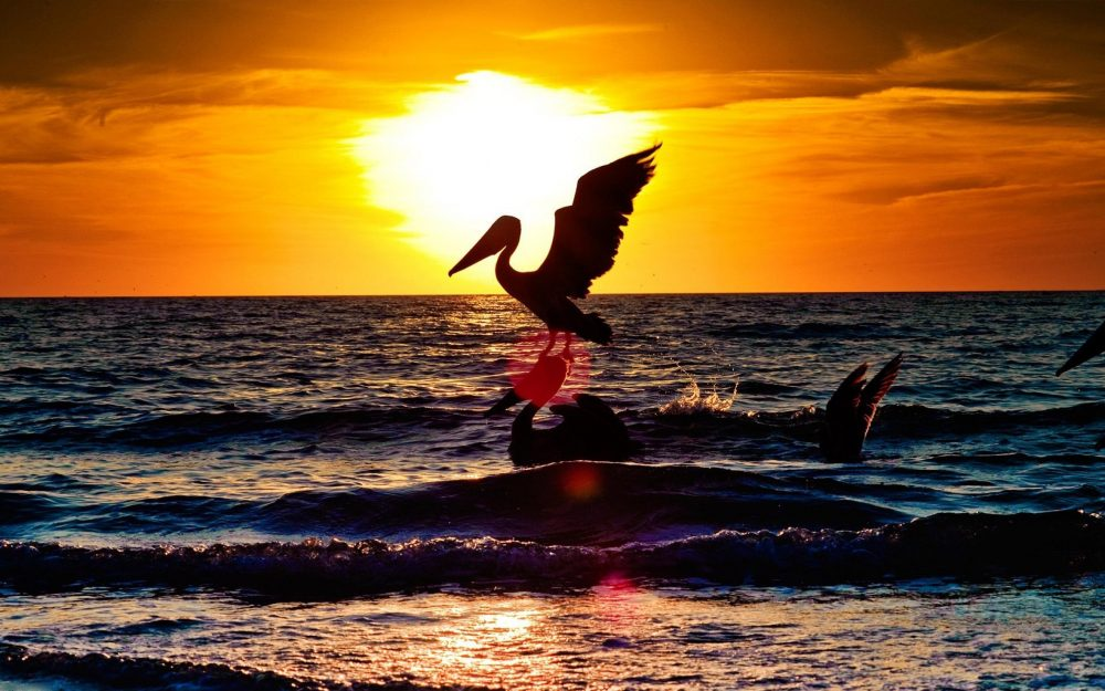 Predation stork wallpaper