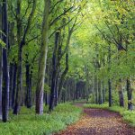 Green woods country road Landscape wallpaper