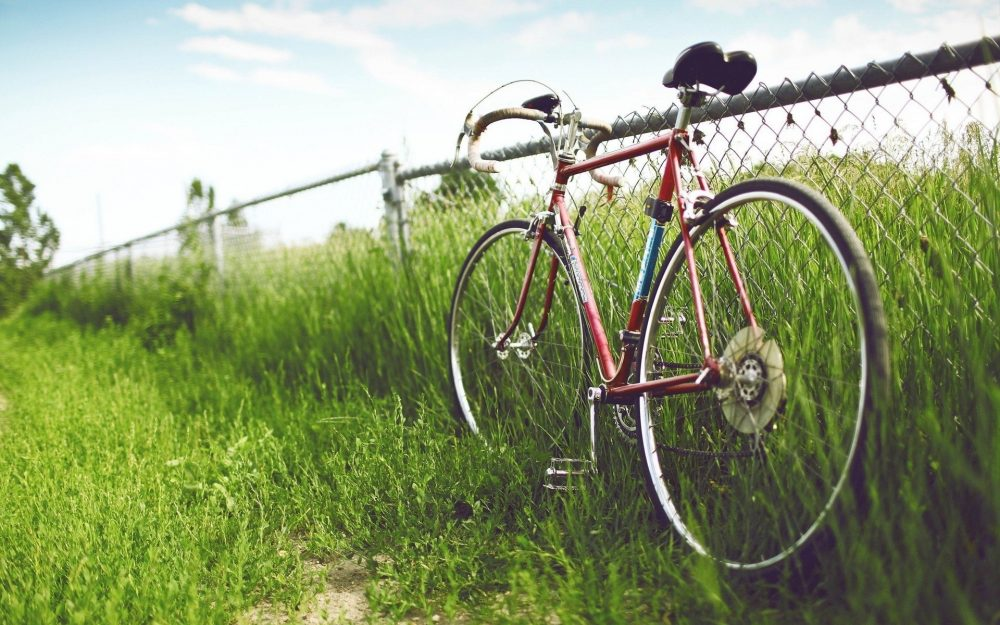 Emperor fence cycling HD Wallpaper