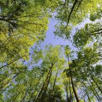 Tall trees in the forest natural beauty HD Wallpaper