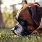 Background, view, dog