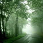 Morning fog forest trail Landscape wallpaper