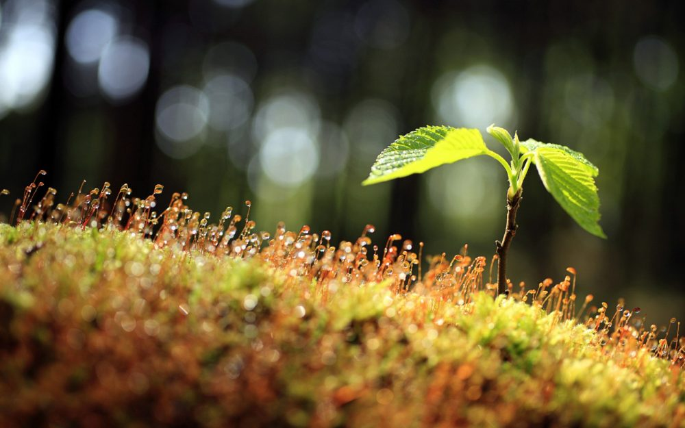 growing up healthily hd wallpaper