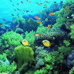 HD Underwater World Fish live wallpaper picture