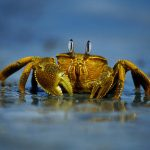 Crab on the beach HD wallpaper