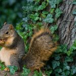 Forest squirrel HD wallpaper download