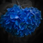 Pictures, wallpaper, photo, background, macro, flowers