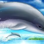 HD wallpaper beautiful dolphin pictures