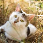 sitting, cat, grass, spotted, opinion wallpaper
