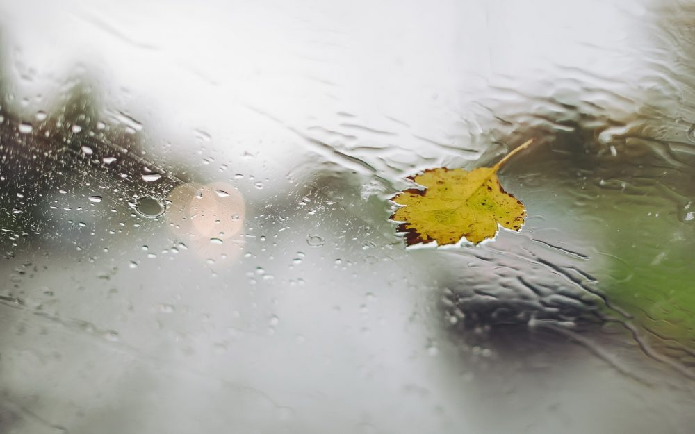 leaf, drops, glass