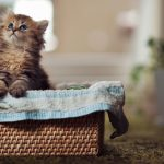 Meng cat basket wallpaper