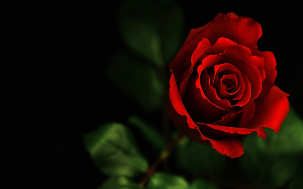 A bouquet of roses wallpaper