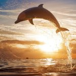 Dolphin HD wallpaper beautiful ocean at dusk