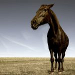 Horses, horse, grass, photo, field, wallpapers, animals