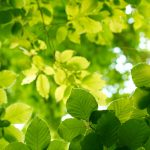 Green leaves of plants desktop wallpaper
